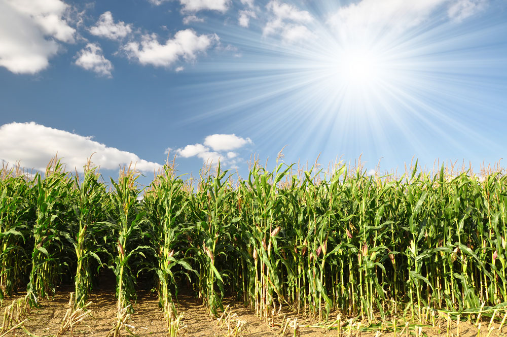 玉米田的故事 (Givers Gain 付出者收穫)